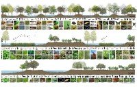 Existing Site Sections- Synergy between Wetlands and Ecosystem <a href='http://www.archiprix.org/projects/2015/P15-1760/P15-1760_4197_blowup.jpg' target='blowup'><font size='1'>(enlargement in new window)</font></a>